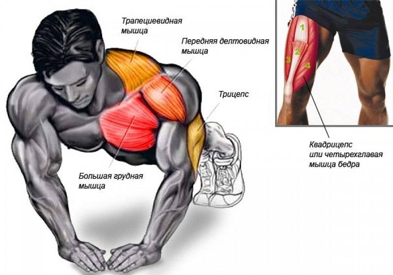 Как правильно отжиматься от пола, чтобы накачать грудные мышцы мужчинам