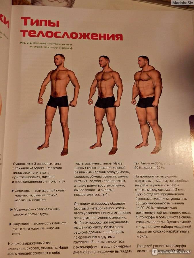 Диета для набора мышечной массы эктоморфу
