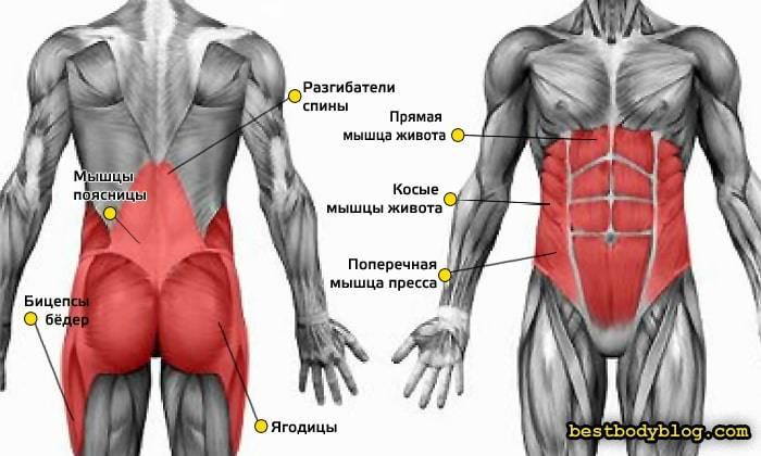 Мышцы кора: что это такое и как тренировать