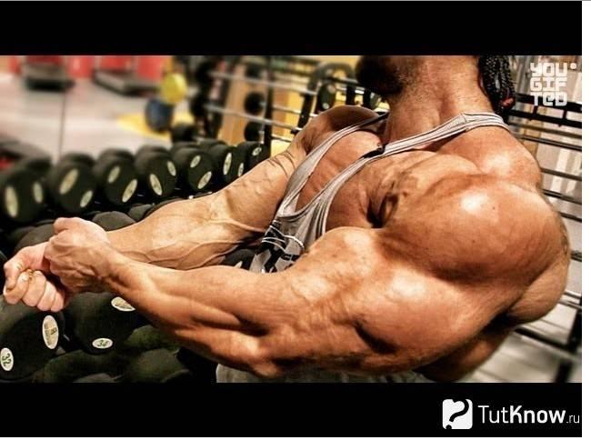 Тренировка трицепсов. 10 советов даррема чарльза
