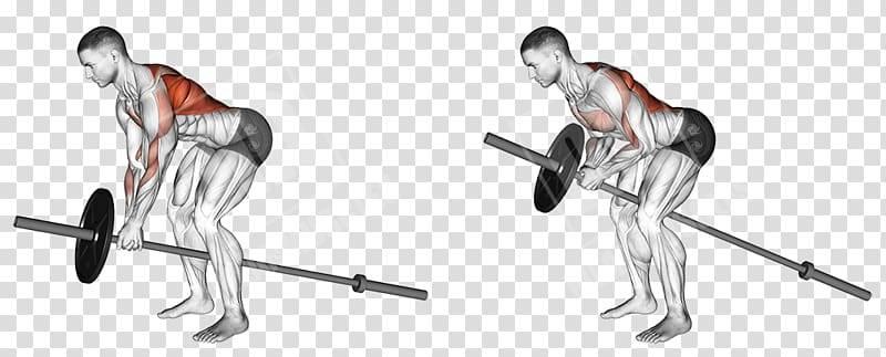 Тяга т-грифа в наклоне – sportfito — сайт о спорте и здоровом образе жизни