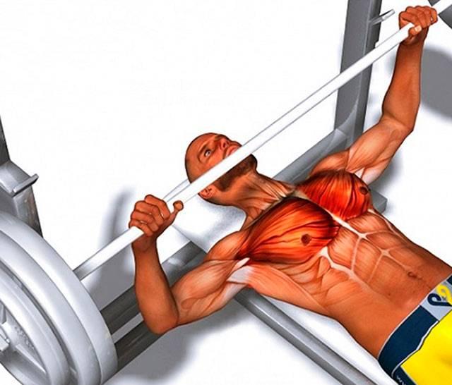Как накачать мышцы: от а до я