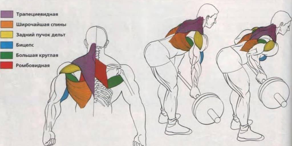 Тяга гантелей к поясу в наклоне: техника выполнения, какие мышцы работают, ошибки