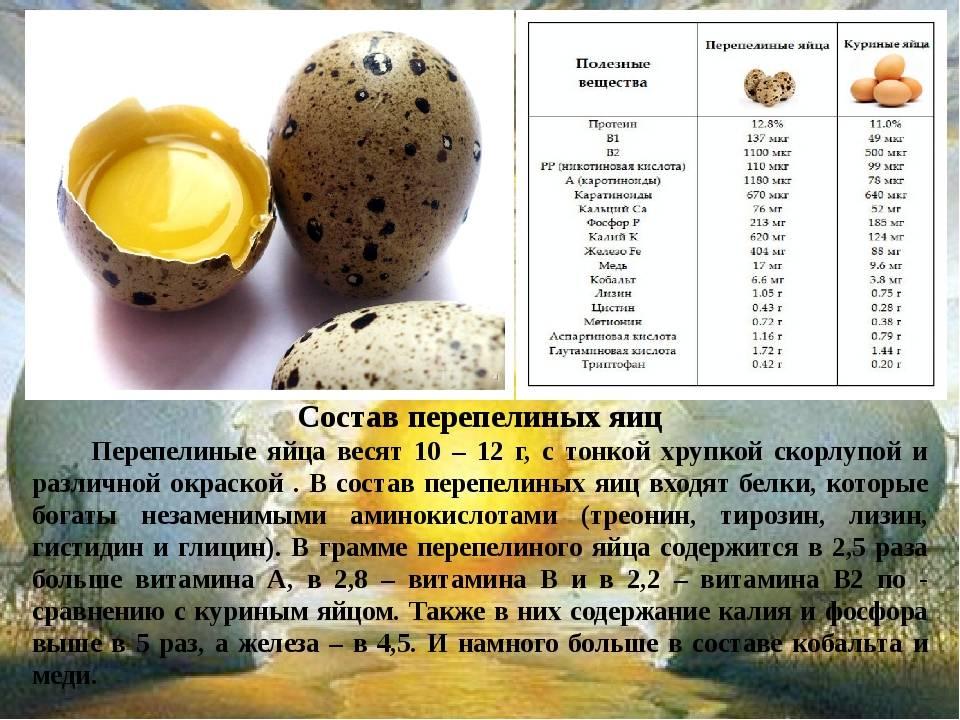 Яйцо гусиное: питательные характеристики   food and health