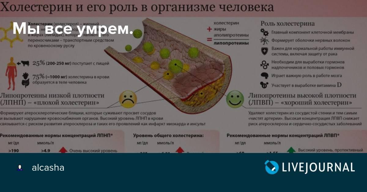 Продукты, содержащие холестерин. таблица продуктов с высоким уровнем холестерина.