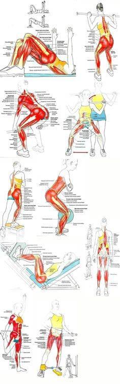 Упражнения для ягодиц в тренажерном зале – sportfito — сайт о спорте и здоровом образе жизни