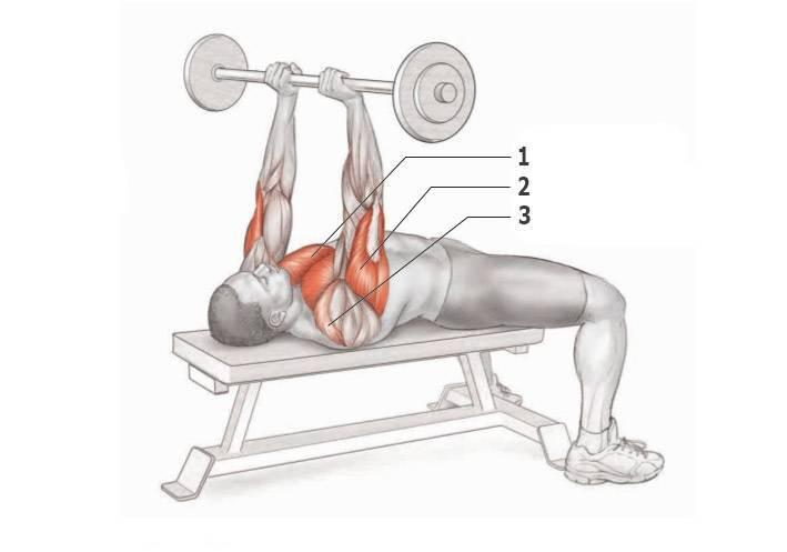 Жим гантелей сидя, какие мышцы задействованы, правильная техника, виды