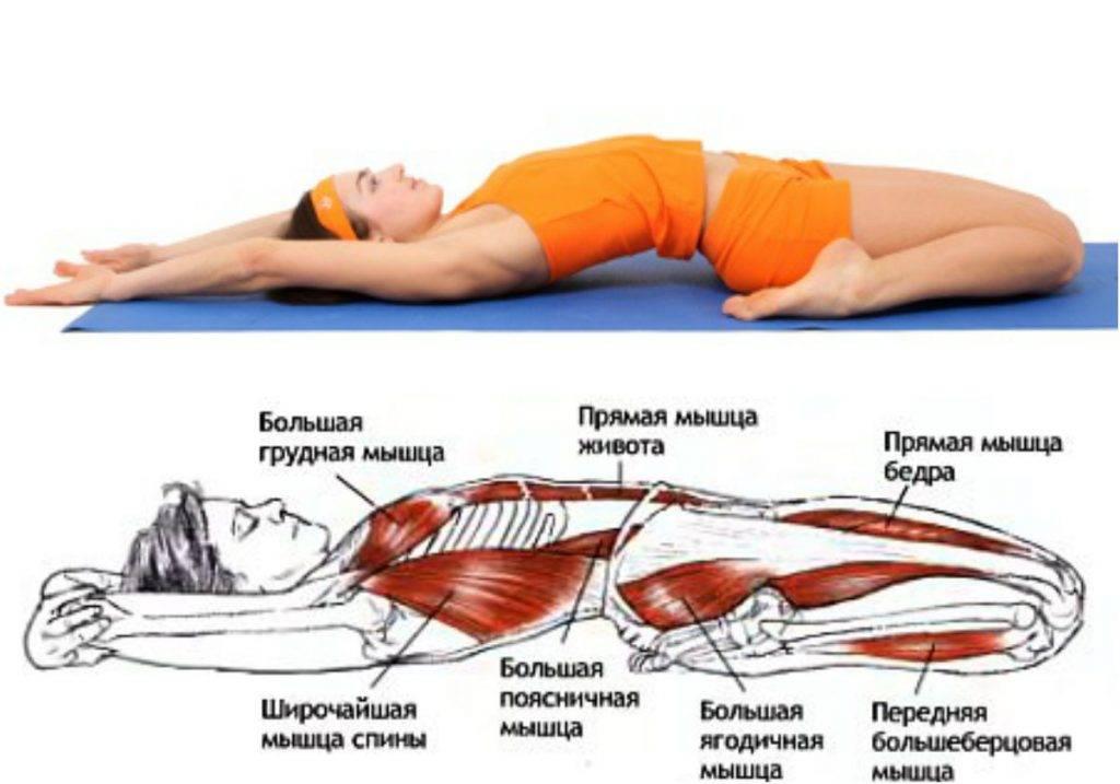 Растяжка мышц пресса и спины