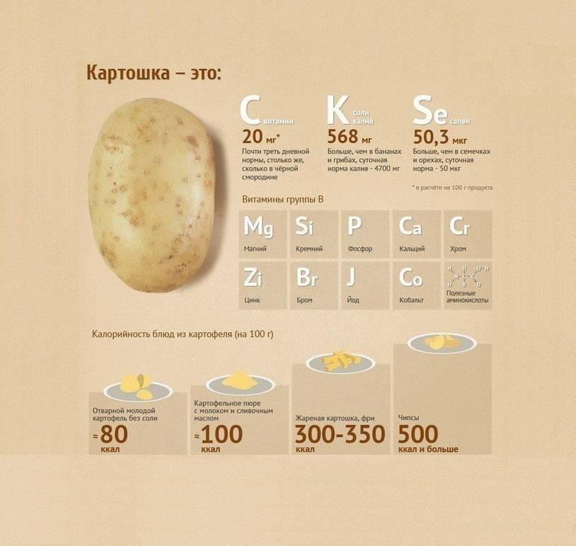 Картофель — калорийность (сколько калорий в 100 граммах)
