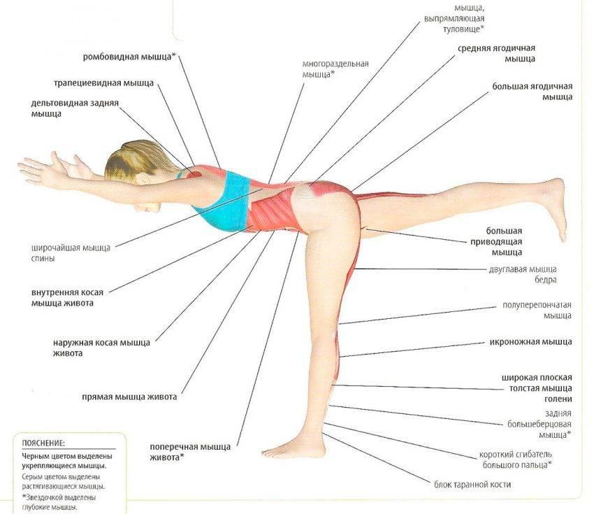 Упражнение ласточка