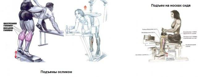 Упражнение осел: видео и фото упражнения