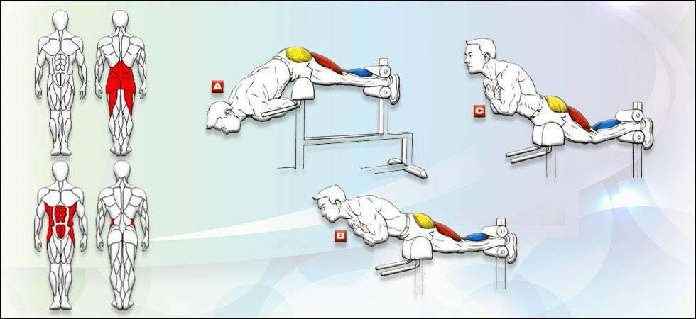 Как накачать спину дома: руководство тренинга в домашних условиях