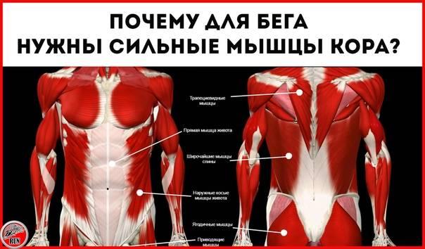 Мышцы кора. основные упражнения для укрепления и усиления