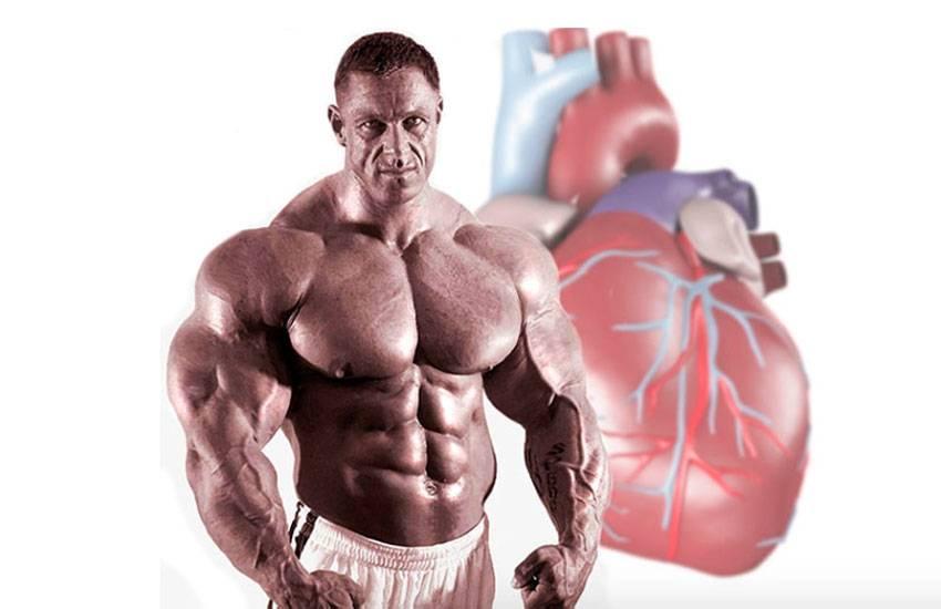 Вреден ли бодибилдинг или большая мышечная масса для сердца?