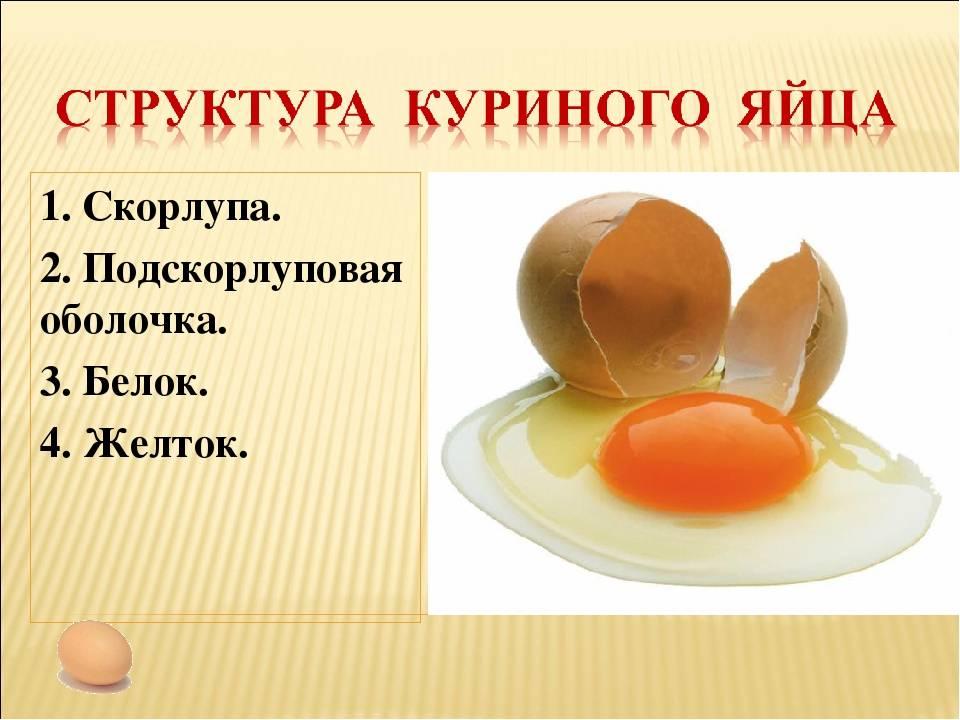 Желток - полезные и опасные свойства желтка