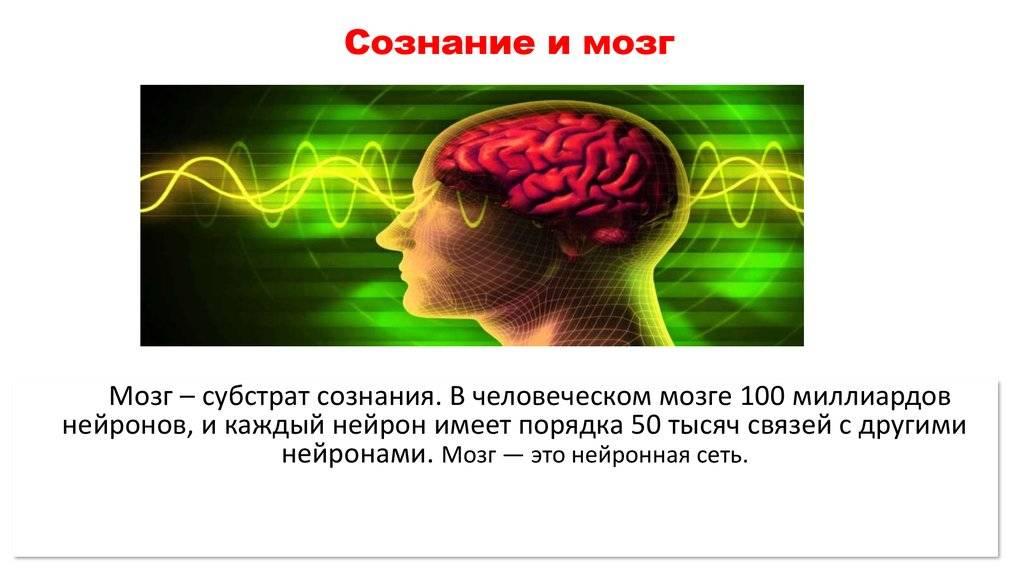 Интеллектуалы не толстеют. как работает мозг человека и на что он способен?