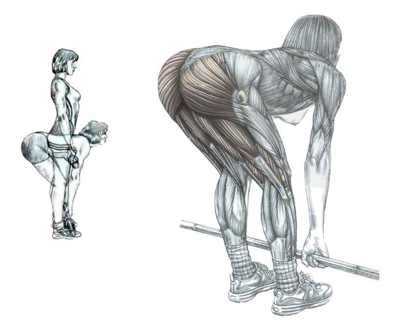 Боковая гиперэкстензия: техника выполнения, какие мышцы работают