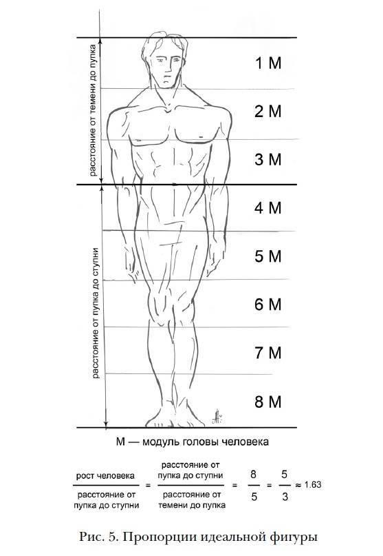 Пропорции женского тела. антропометрия и пропорции в бодибилдинге. замеры тела, контроль достижений и все такое.