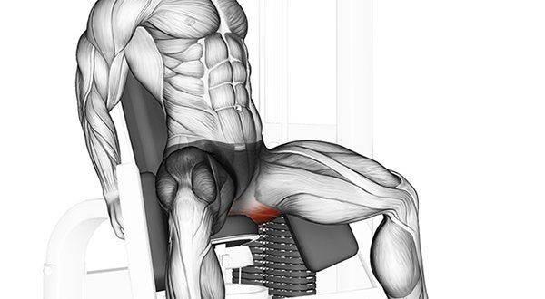 Польза разгибаний ног в тренажере, техника выполнения и разбор ошибок