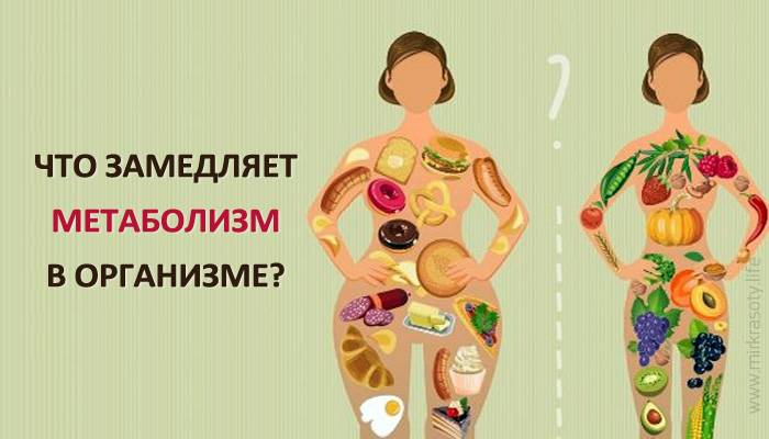 Как восстановить обмен веществ (метаболизм) в организме и похудеть?