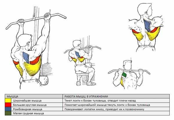 Как накачать спину женщинам: 4 тренировочные программы.