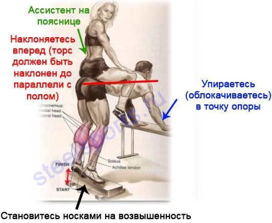 Упражнение ослик на икры в бодибилдинге — техника, работа мышц