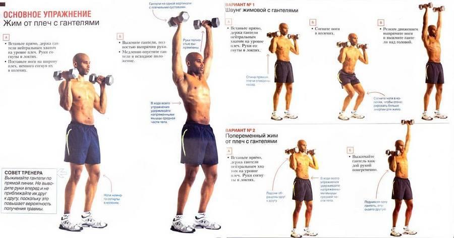 Программа тренировок с гантелями дома   experience fitness