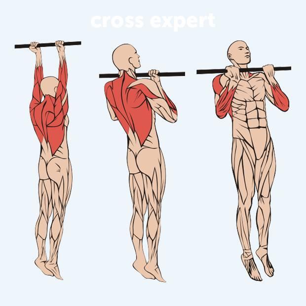 Как накачать мышцы спины? лучшие упражнения и секреты для тренировок