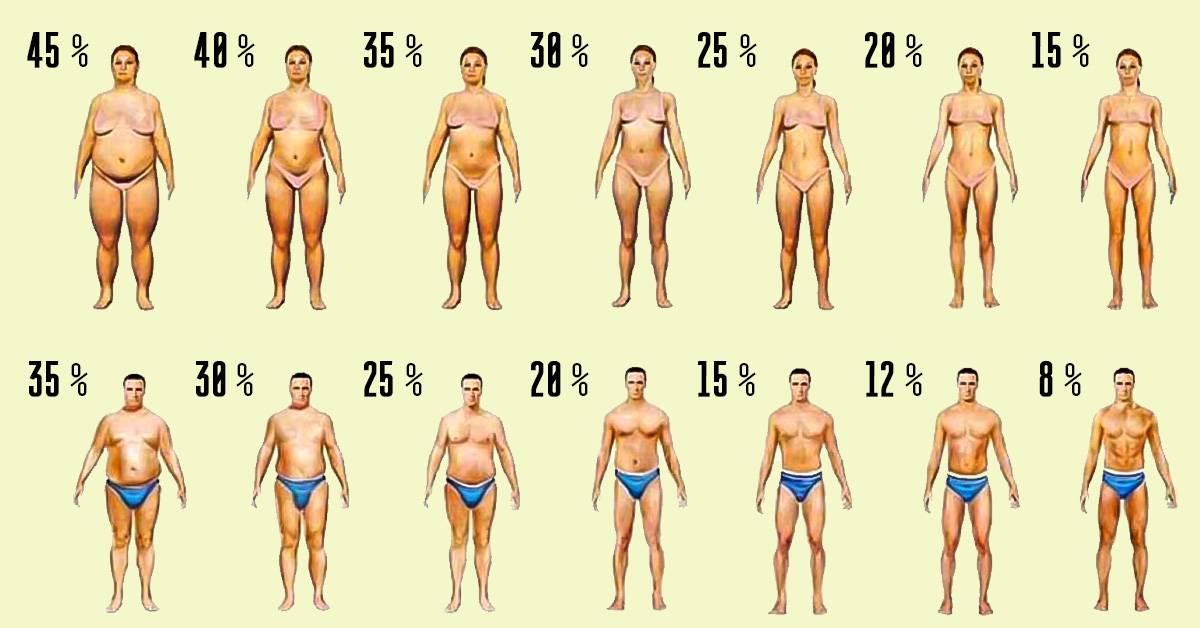 Процент жира у мужчин: показатели, норма и отклонения, советы
