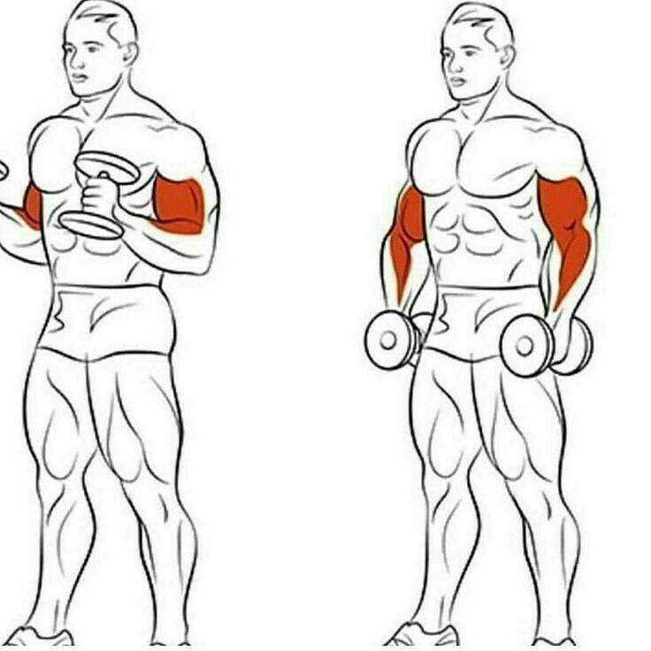 Как накачать бицепс: видео, упражнения, программа тренировок
