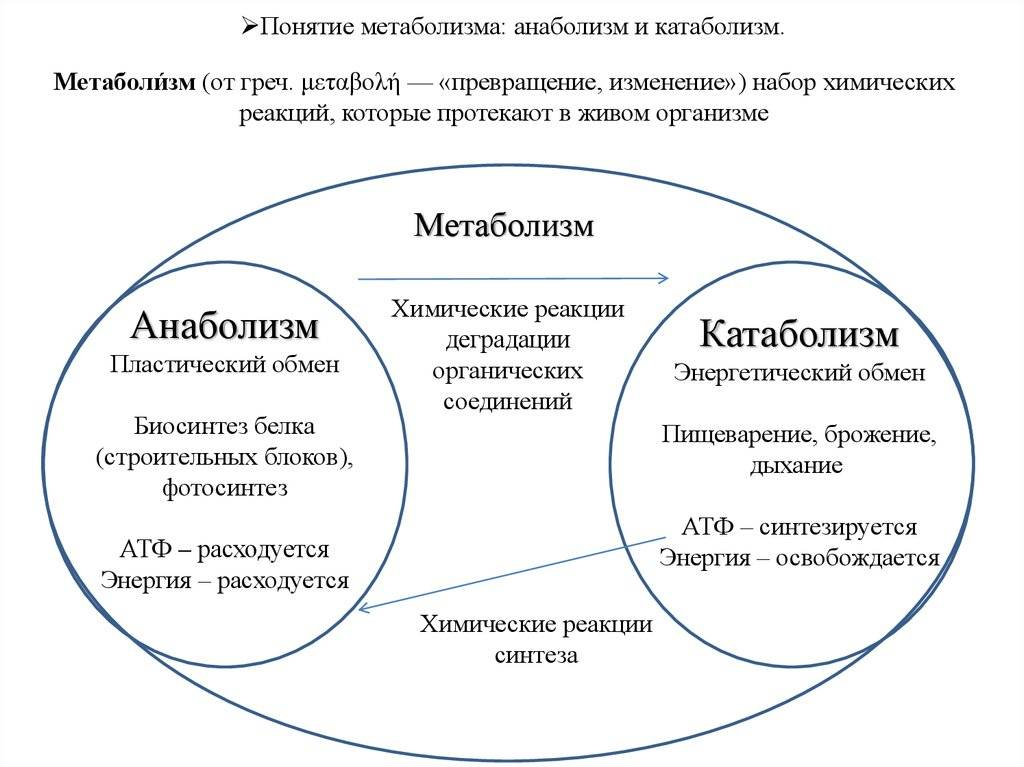 Метаболизм клетки. энергетический обмен и фотосинтез. реакции матричного синтеза. | егэ по биологии