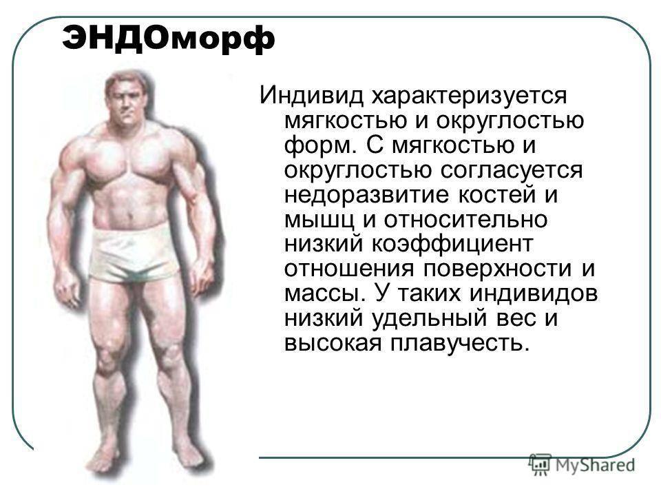 Типы телосложения, как определить тип телосложения
