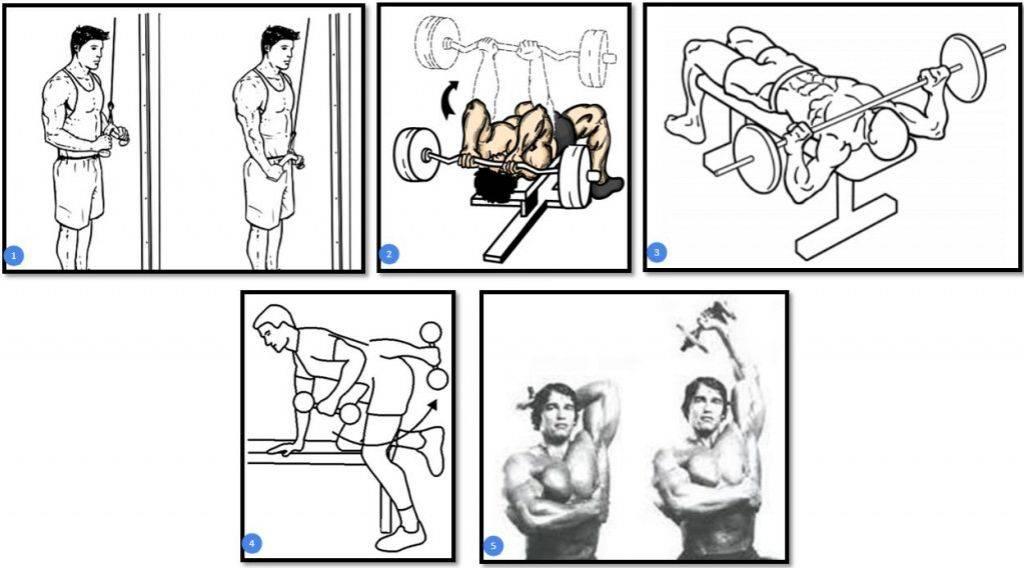 Упражнения на все группы мышц для мужчин: топ-100 фото. лучший комплекс упражнений для домашних условий