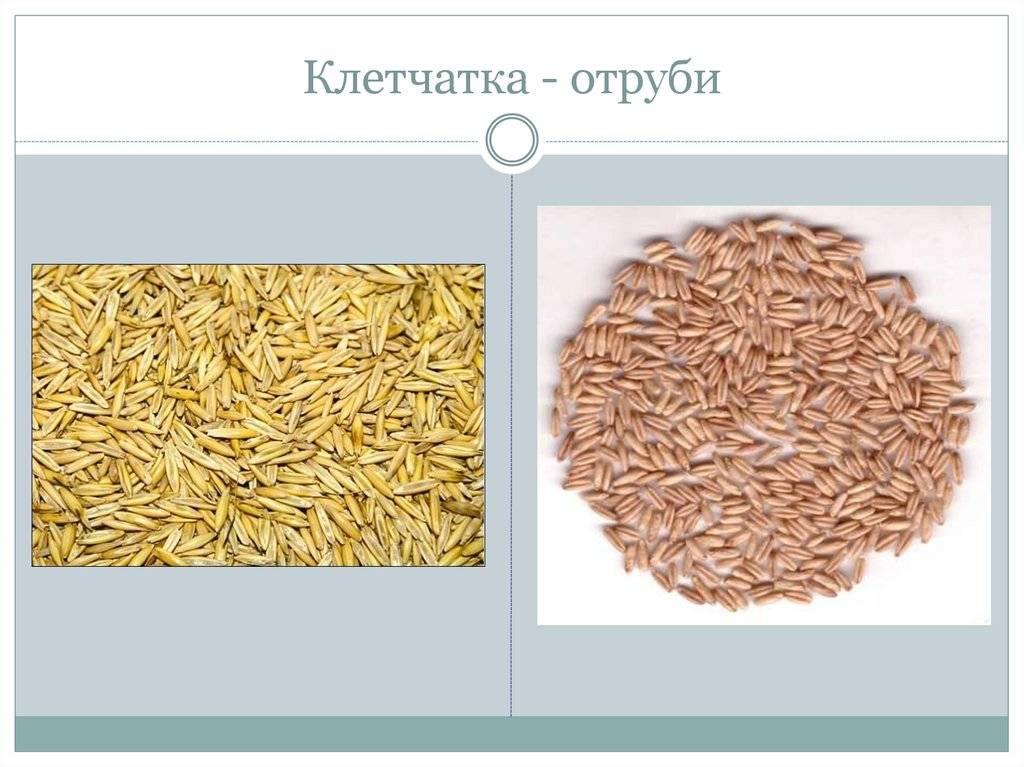 Клетчатка (пищевые волокна) – что это и зачем она нужна?