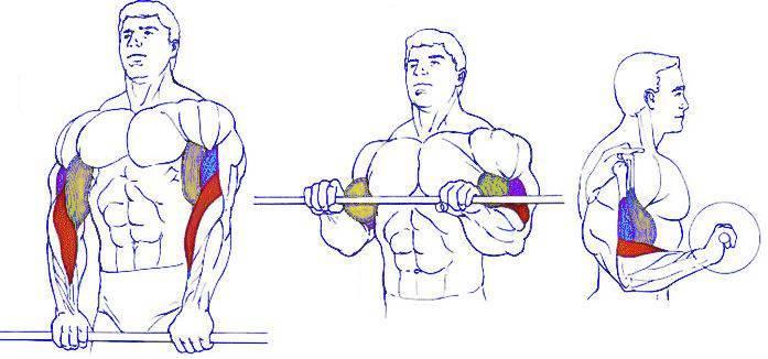 Если делать эти 5 упражнений, у тебя будет могучий бицепс