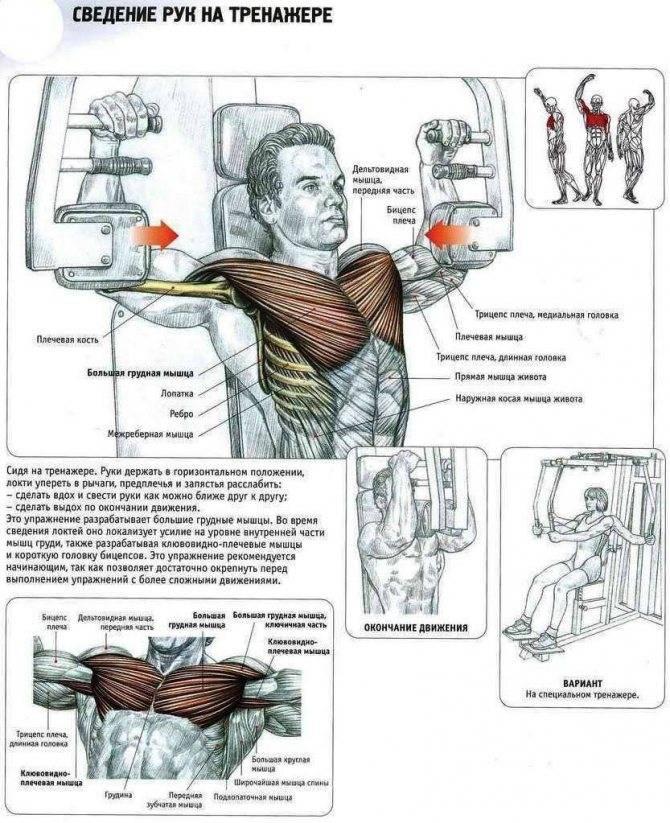 Как накачать верх груди в домашних условиях: упражнения