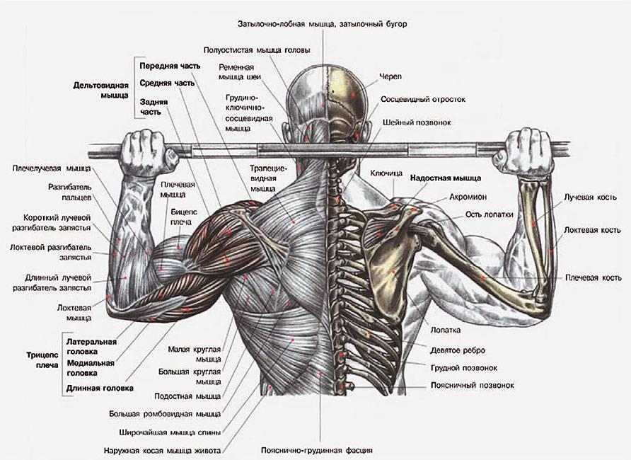 Подтягивания на спину: техника, ошибки выполнения и разминка