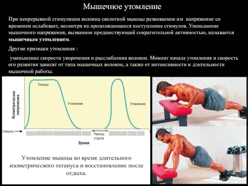 Как накачать попу в домашних условиях, упражнения для ягодиц | твой фитнес