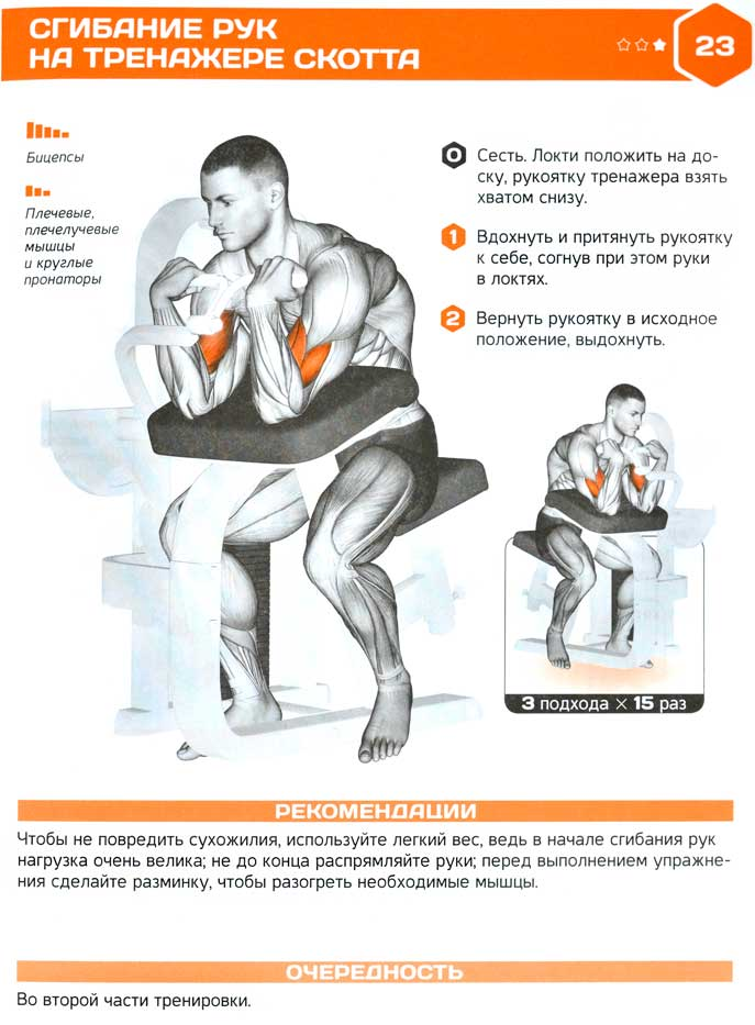 Сгибание рук на скамье скотта — эффективное упражнение на бицепс от ларри скотта