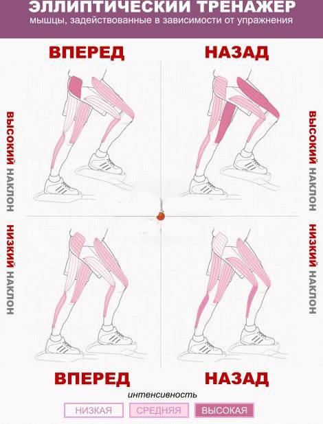 Степпер и его виды – какой лучше для похудения, как правильно заниматься на тренажере