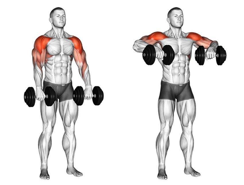 Упражнение шраги для тренировки трапециевидных мышц спины