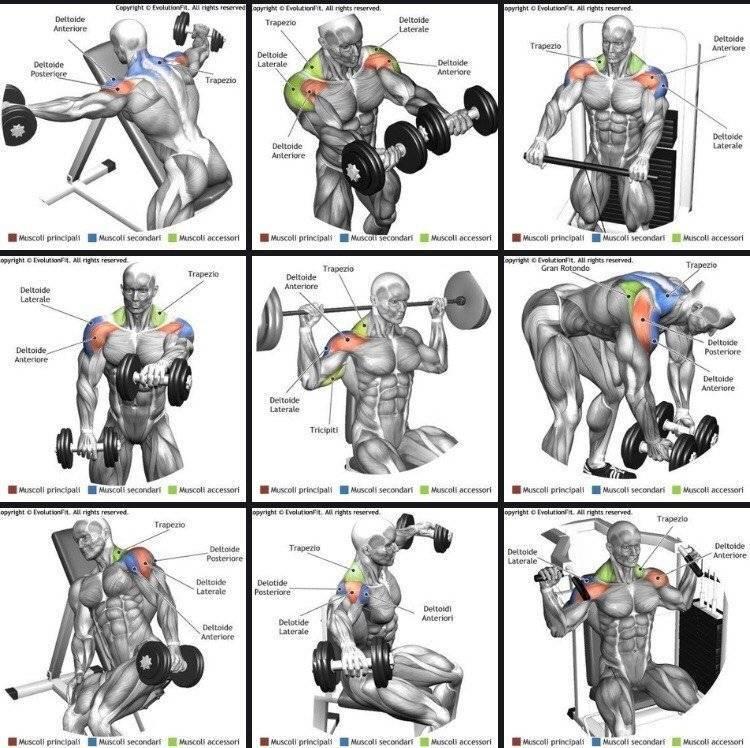 Тренировка плеч дома