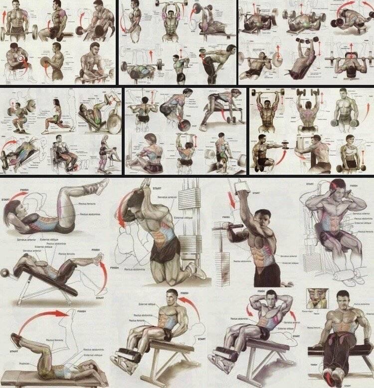 Комплекс силовых упражнений на мышцы от флекса уиллера