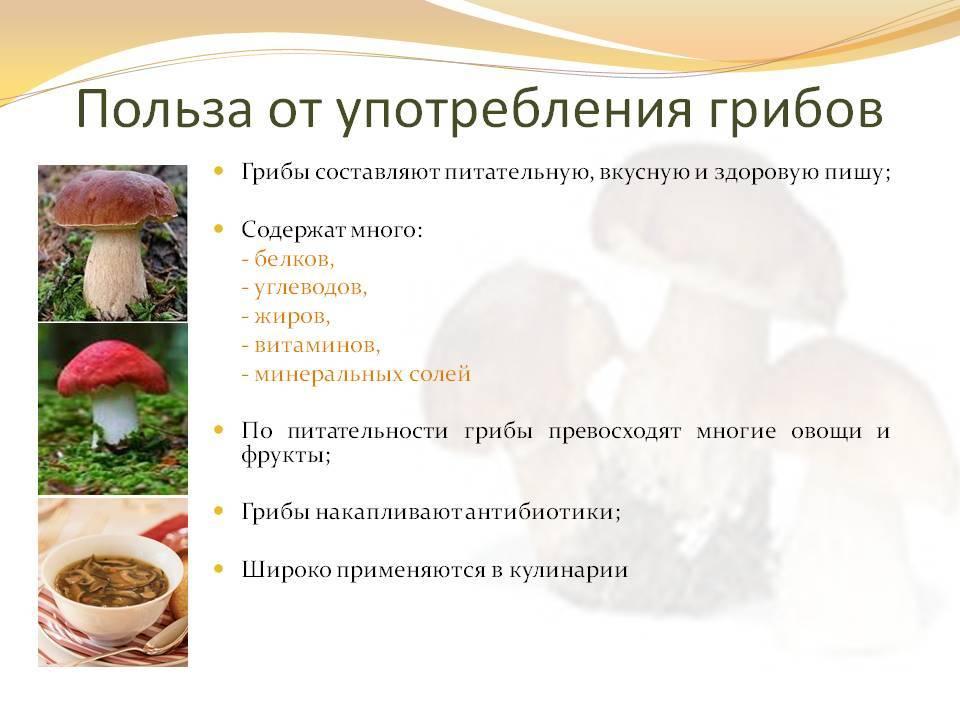 ✅ перевариваются ли грибы в желудке у человека - akrobatika-sevastopol.ru