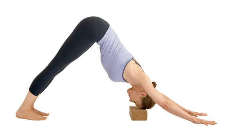 Поза из йоги «собака мордой вниз» — техника выполнения асаны «адхо мукха шванасана» (фото), польза и противопоказания