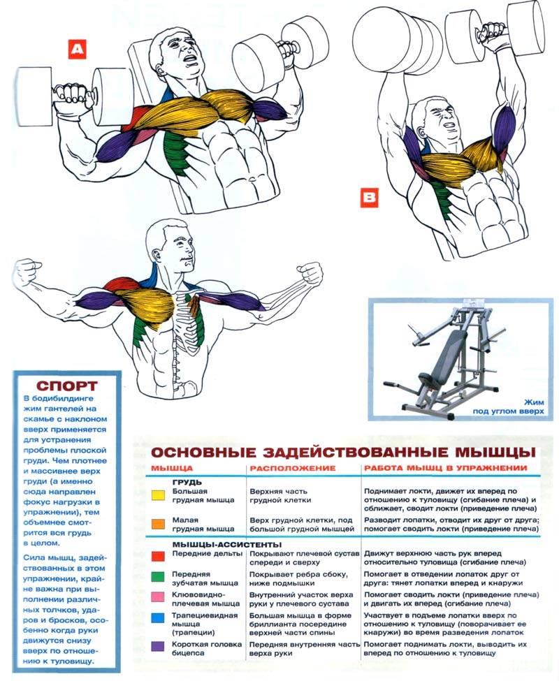 10 самых эффективных упражнений для грудных мышц