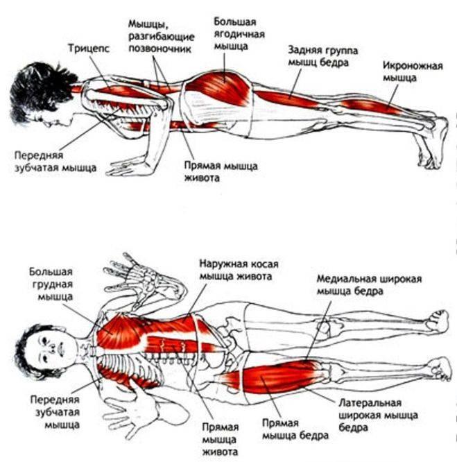 Упражнение ласточка лежа на животе техника