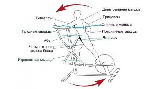 Какие мышцы работают при занятиях на велотренажере?