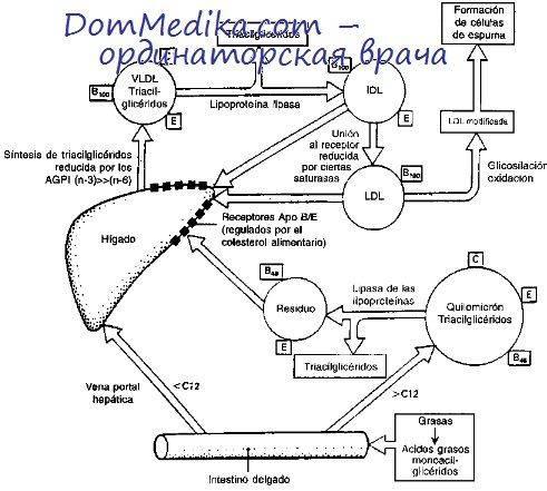 Как запустить процесс жиросжигания в организме? сжигание жира: основные правила - tony.ru