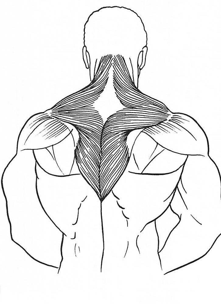 Помощь при боли верхней части трапециевидной мышцы   fpa